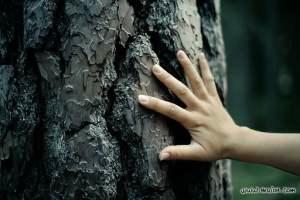 hand-on-tree-bark.jpg