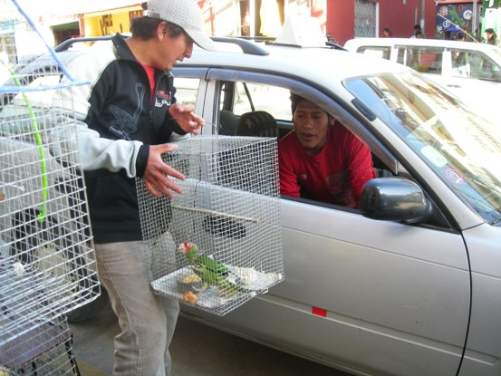 Man Selling a Scarlet-fronted Parakeet