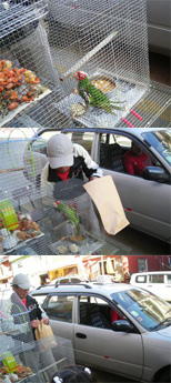A street vendor bigs a bird for sale