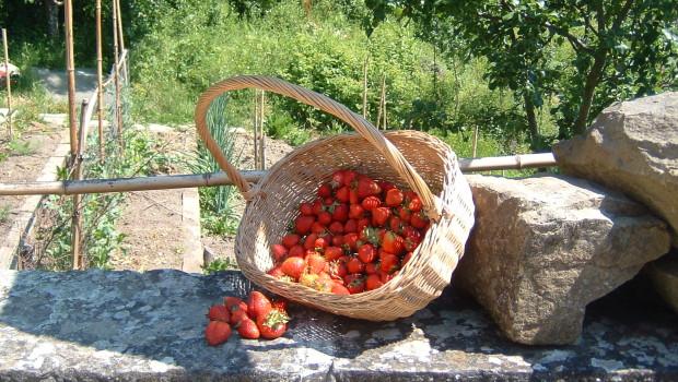 tuscany farming