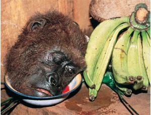 Beheaded Gorilla