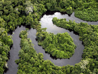 Brazil owns the single largest area of the Amazon Rainforest