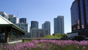 Chicago green roof smarter energy cities NRDC