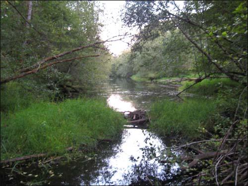 beaver creek dam