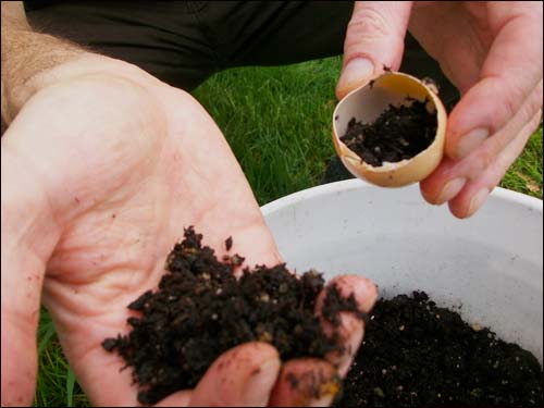filling egg shell with soil