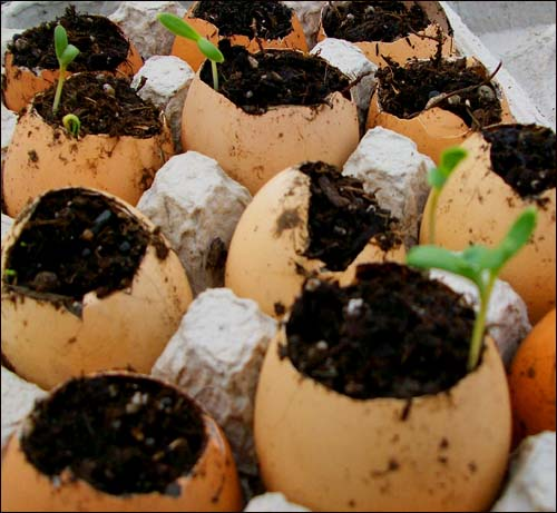 egg shell sprouts