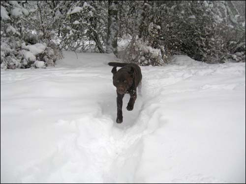 skeeter in the snow