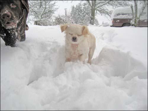 sugar in the snow