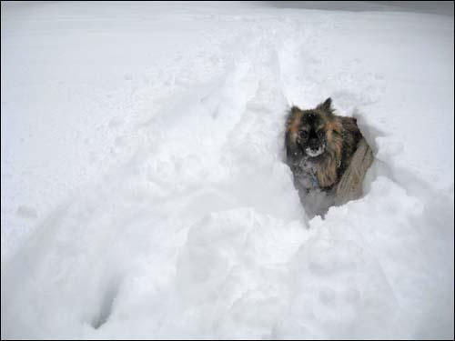 wolfie in the snow