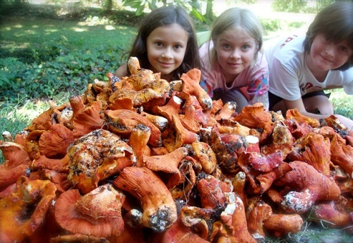 foraging lobster mushrooms in Asheville