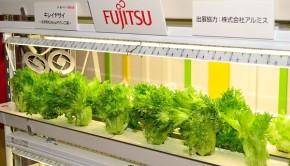 racks_of_fujitsu_lettuce