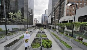 Urban Farm 1